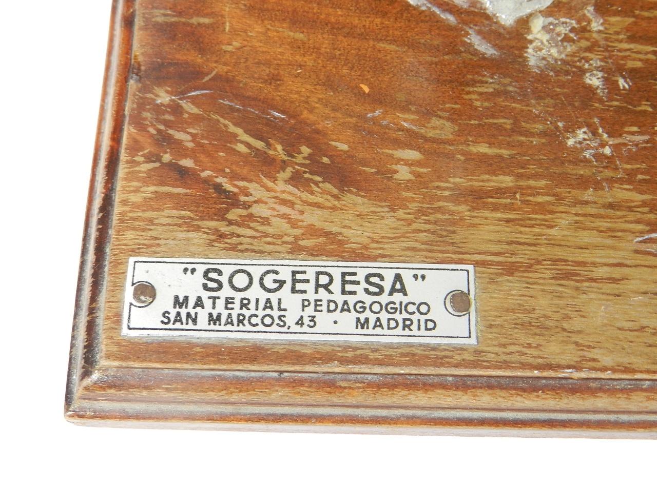 Imagen MAQUETA PEDAGÓGICA DEL OÍDO 39025